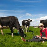 Usando IoT se Incrementa la Eficiencia, Productividad en la Ganadería